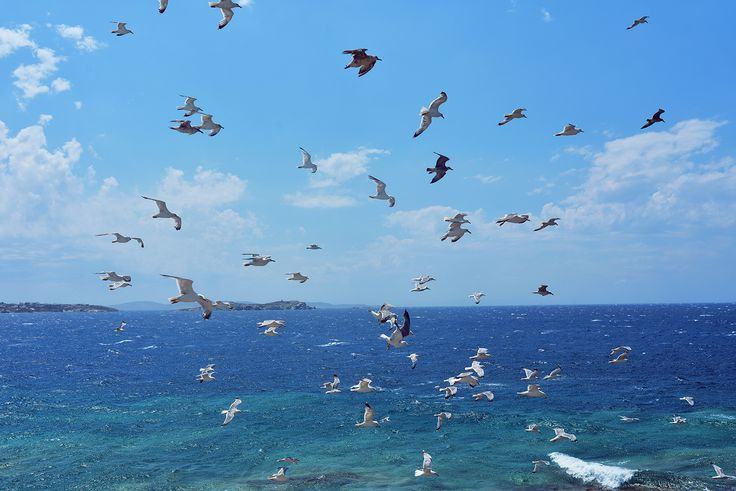 Seagulls #Mykonos #passionforgreece