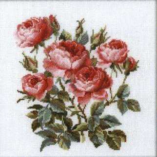 róże 3