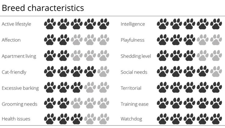 Everything you need to know about the Belgian Malinois