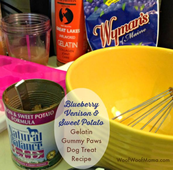 gummy treats for dogs