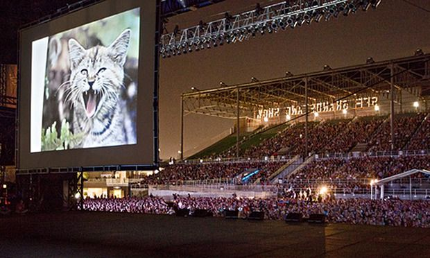 Glasgow to Host Cat Video Festival | Cat Daily News