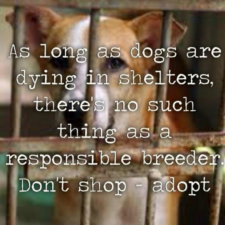 Adopt don't shop!!!!!! We have 3 perfect, amazing and loving fur babies all straight from the humane society!