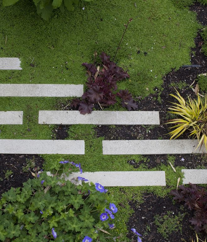 Stepstone's narrow concrete pavers add a graphic touch to the garden. Photo by Dustin Aksland.