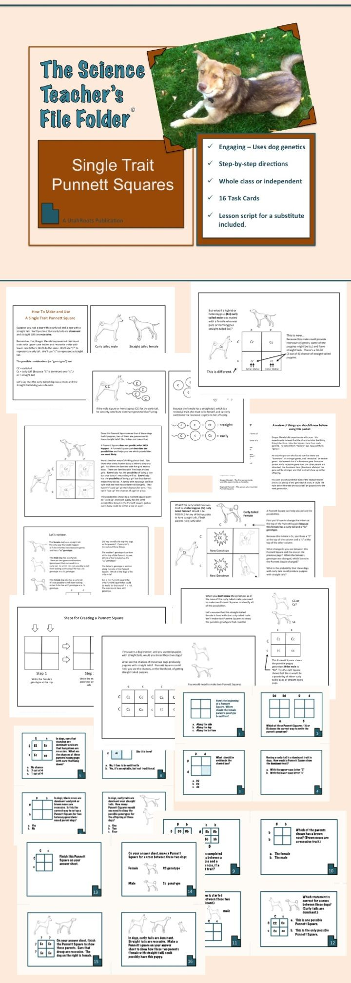 worksheet Genetics Worksheet best 25 punnett square activity ideas on pinterest biology classroom mitosis and life science