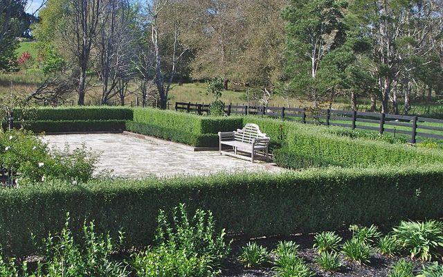 Corokia 'Geenty's Green' instant hedges