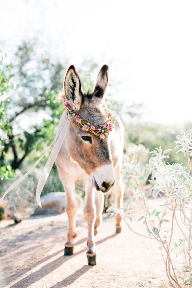 wedding burro with flower crown