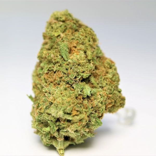 MANGO HAZE  Mango haze is a three-way sativa crossbreed with a THC content of 17-23%. The nugs are light green; shimmering in trichomes with light hues of orange pistils.