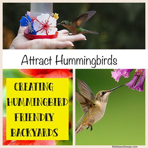 Making your yard hummingbird pleasant - Get them to visit your yard. Provide a food source: sugar water recipe, plant flowers, provide nesting materials.