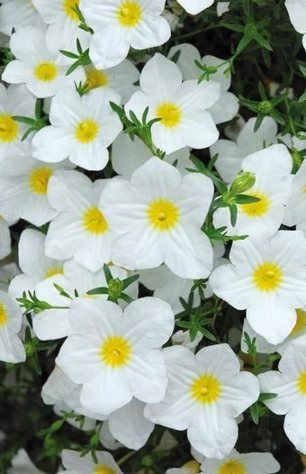 169 besten ⚘ FaSciNaTinG FLOWERS ⚘ Bilder auf Pinterest ...