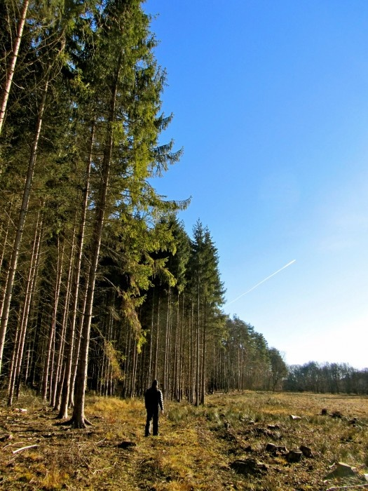 just take a walk in the are of the National Park of Őrség Region...  picture by www.pajta.hu