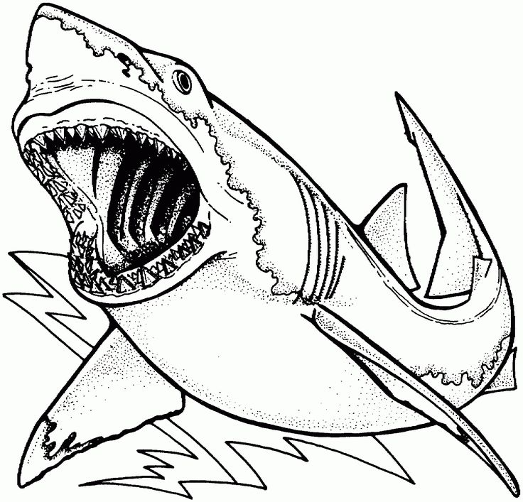 Compromise Shark Colouring Pictures Coloring Page Unique