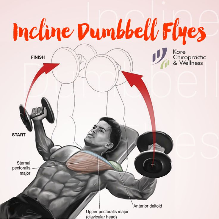 Chest Anatomy Exercise Incline Dumbbell Flyes 💪