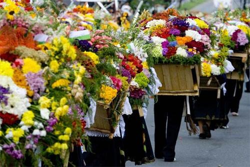 La ciudad colombiana se engalana con flores en los primeros días de Agosto, mostrando este vistoso y tradicional espectáculo de colores, danza y cultura.