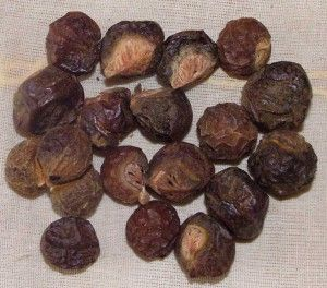 In nature saponin, contained in saopnuts, is a mild insecticide and anti-bacterial compound, it is used to repel bugs and fungus from tress naturally! #soapnuts