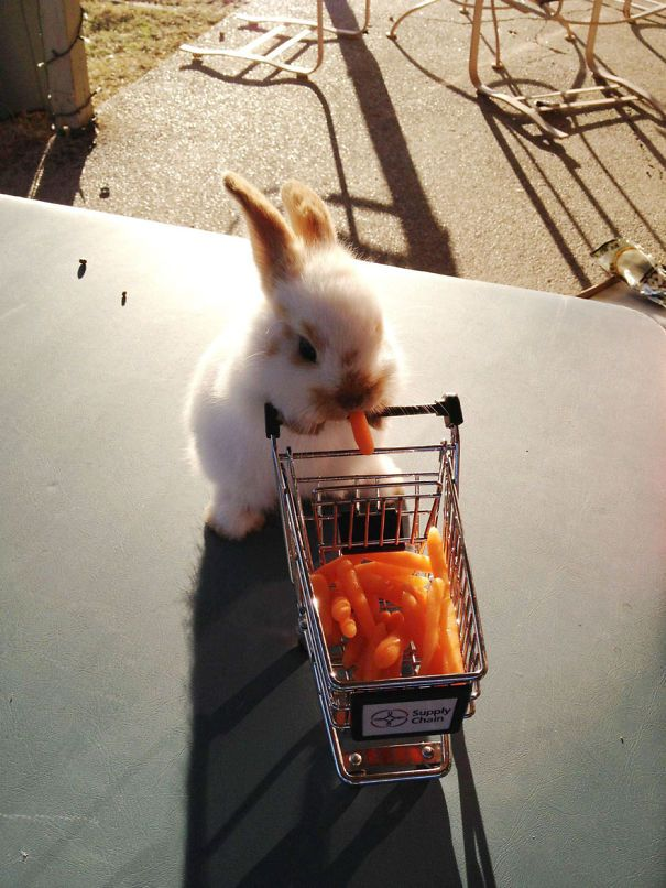 This Bunny Has A Tiny Cart Of Carrots