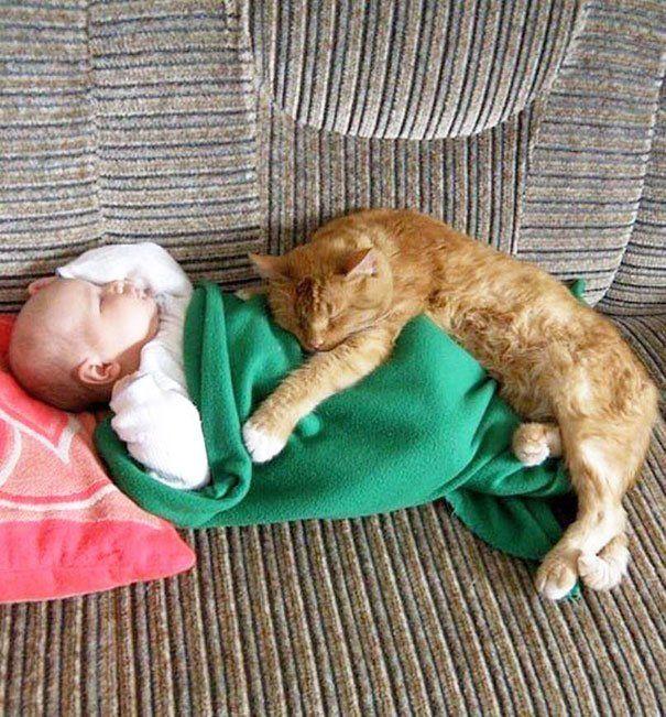 Może psy są najwierniejszymi przyjaciółmi ludzi, ale koty to najlepsi towarzysze dzieci!