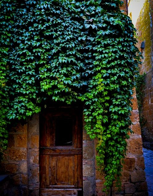♔ Enchanted Fairytale Dreams ♔: Gardens Portal, Ivy Covers, Gardenspatiosoutdoor Spaces, Front Doors, Gardens Virginia Creepers, Creepers Covers, Photo, Gardens Creepers, Beautiful Things