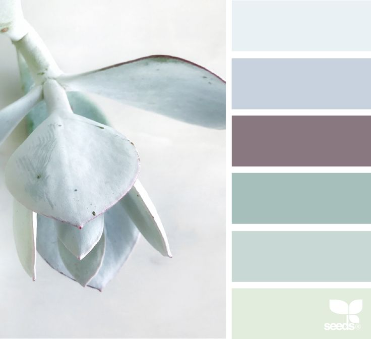 Succulent Tones - https://www.design-seeds.com/in-nature/succulents/succulent-tones-4