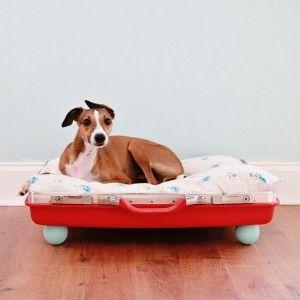 11 DIY Dog Hacks That'll Change Your Life | Rover Blog
