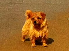 op het strand bij Noordwijkerhout