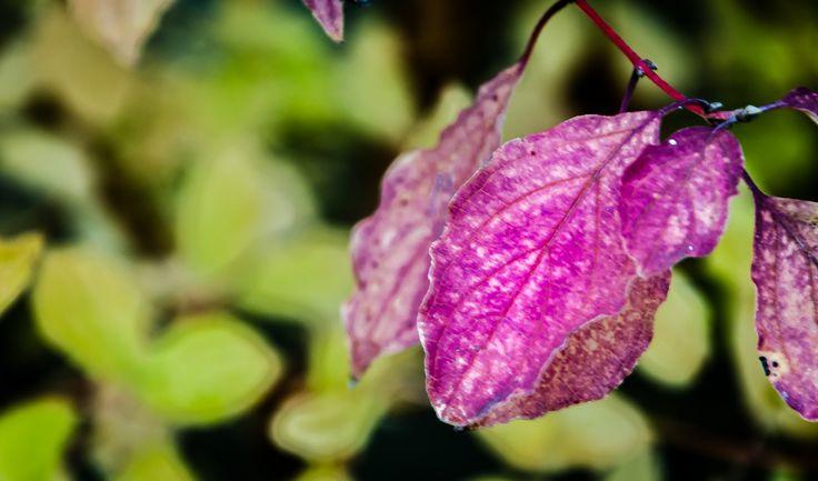 https://flic.kr/p/ZmLmBb | Autumn | Autumns