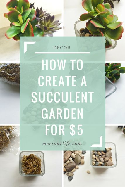 How to create a succulent garden for $5 | DIY projects | diy decor | do it yourself projects | diy ideas