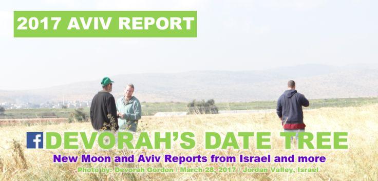 Cebada Madura en Israel CONFIRMADO Aviv esta muy cerca – Buscando en lo Escondido