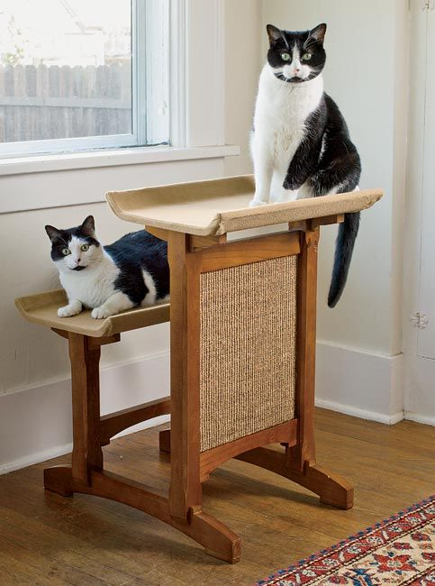 Perfect cat window perch for apartment dwellers. Not only does it provide multi-level perches (great for multiple cats) it also features a scratch pad.