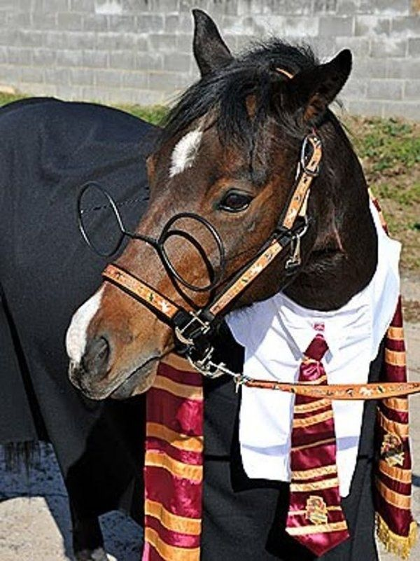 Of course you've dressed your horse up as Harry Potter. WHO WOULDN'T?: Potter Horses, Hors Costumes, Halloween Costumes Ideas, Horses Costumes, Funny Hors, Harry Trotter, Halloween Ideas, Funny Harry Potter, Animal
