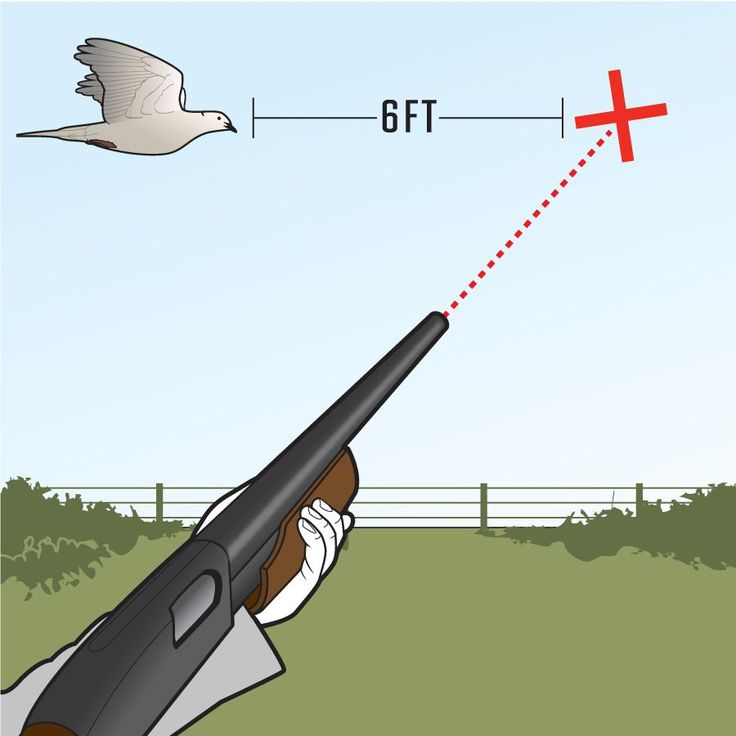 Great Tips for Dove Hunting! This is always the hardest part of bird hunting for me to understand... That the bird can get the that far from the time you pull the trigger till the time your pellets hits the bird