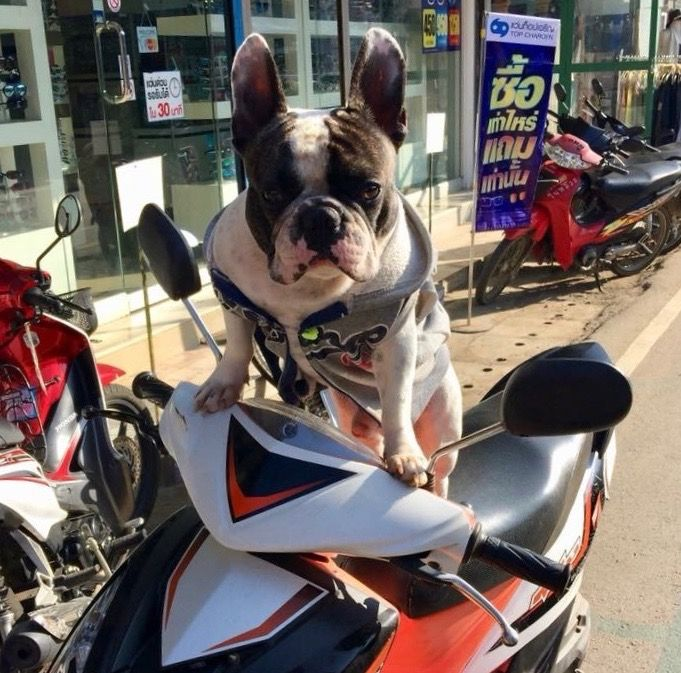 Written by Matthew Twyman (the other Flipflop!)  First time riding a scooter in Asia may be a little daunting. Are they dangerous? Does my insurance cover this? Are there any driving rules in…