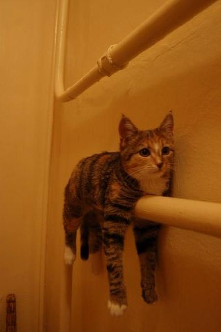 Come down from there, cat; you are not a towel.