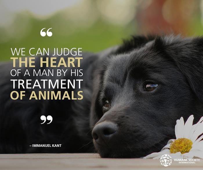 Humane Society International On Instagram Repost If You Agree Humane Society Animal Protection Organization Dog Quotes
