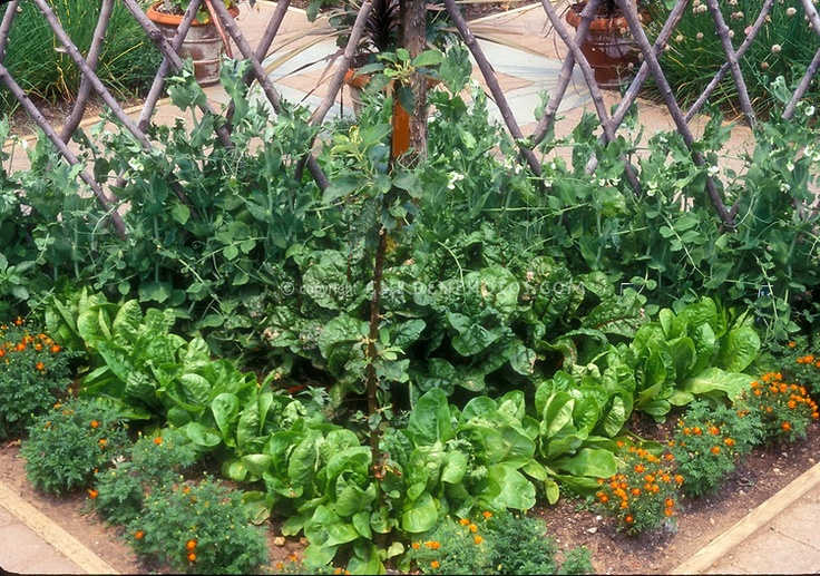 images about companion planting on Pinterest