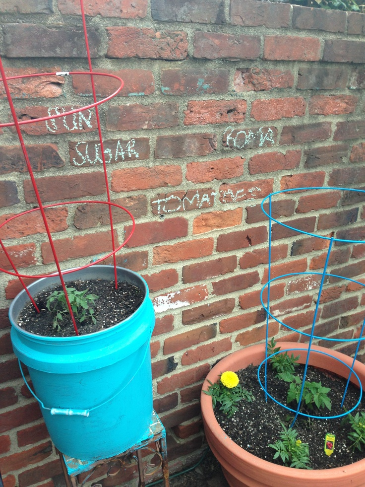 Use 5 gallon buckets for your urban garden and paint them for Gardening 5 gallon bucket
