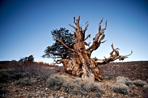 Cei mai interesanți copaci din lume