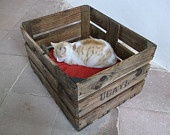 Authentic French crates repurposed as cat beds