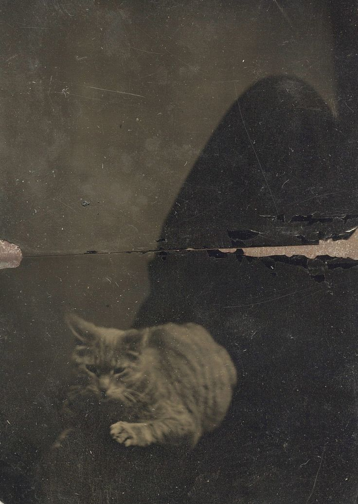 """[Late 19th century """"concealed mother"""" portrait]    via FiestyEily's photostream on Flickr"""