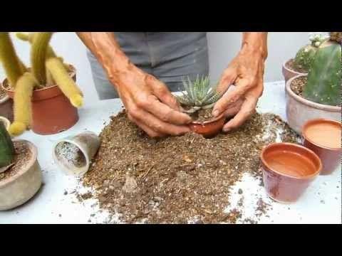 Preparación tierra de cactus - YouTube