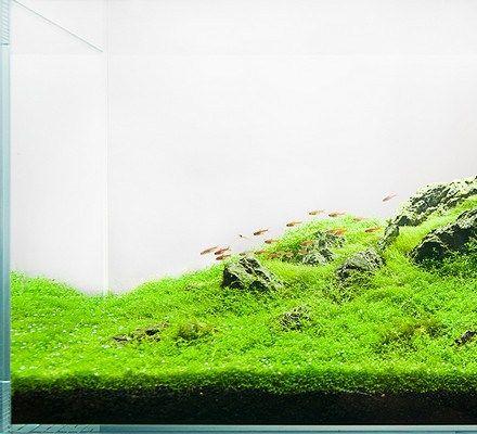 akwarium dekoracyjne Paweł Mielniczek zakładanie akwarium iwagumi nature aquarium aquascape hardscape mini