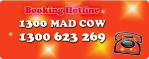 Mad cow sumo suit $440 3 hours