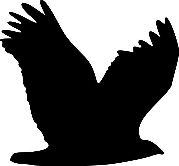 Ørn, Fugl, Dyr, Flyvende, Silhuet