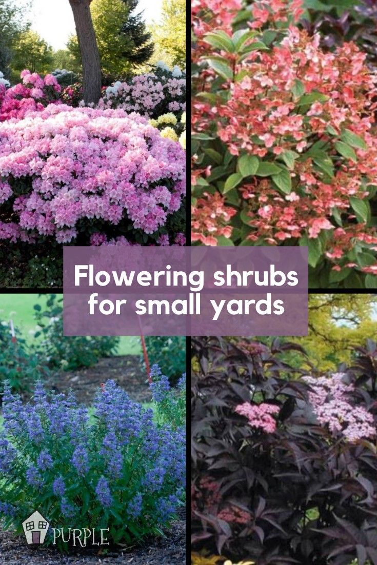 The Most Perfect Perennial Shrubs For Your Garden Pretty Purple Door In 2020 Flowering Shrubs Flowering Bushes Perennial Shrubs