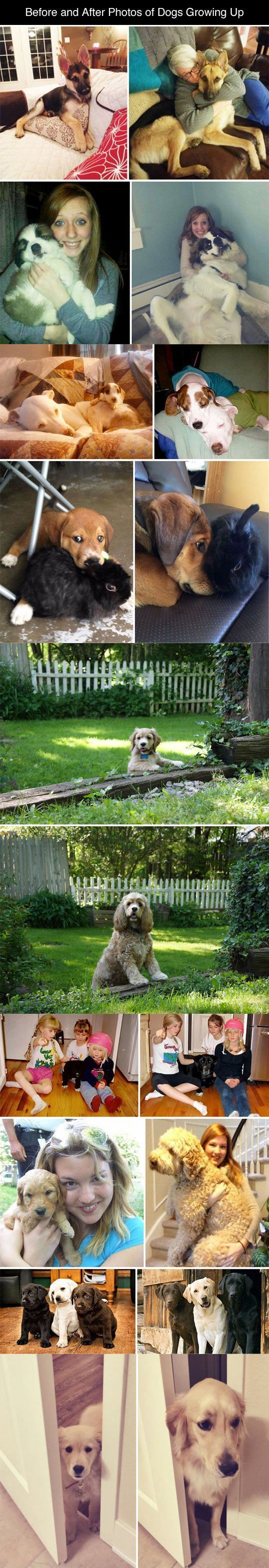 best puppies images on pinterest dog cat funny animals and