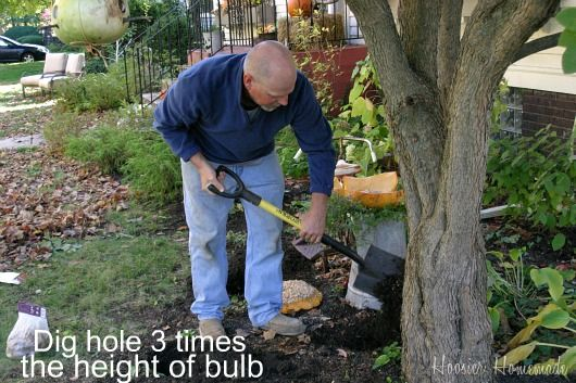 How to plant Spring Flowering Bulbs