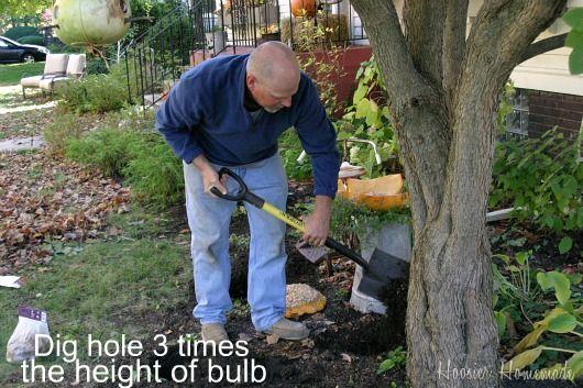 Planting-Bulbs.digging