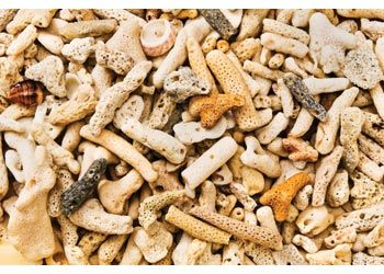 Coral Rubble is formed from old dead coral that is washed up onto the beach. The edges are smooth from years of sea water rolling the pieces around. Supplied in a 1 litre jar.