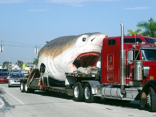 Model of a Megalodon, a gigantic prehistoric shark, on one of Florida's main roads, being transported to the Fort Lauderdale Science and Discovery Museum