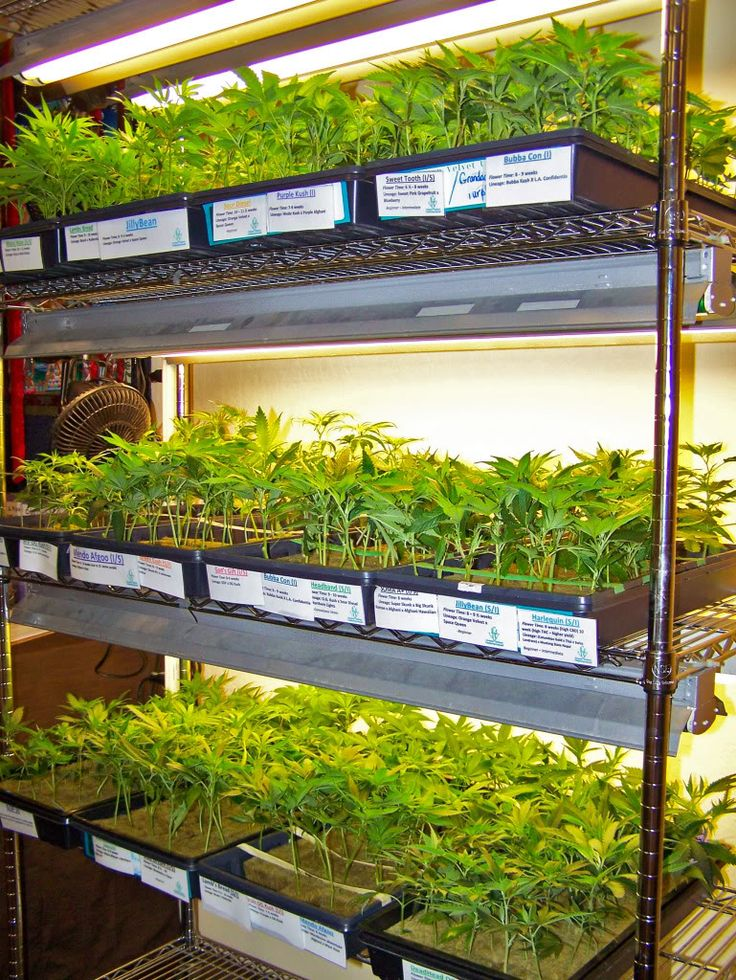 San Jose Medical Marijuana Collective Elemental Wellness Hosts ...