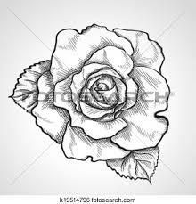 Resultado de imagen para Bosquejo de imagenes de boton de rosas
